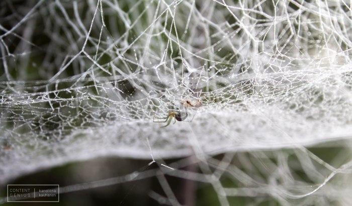 Diamond web, Karoliina Kauhanen