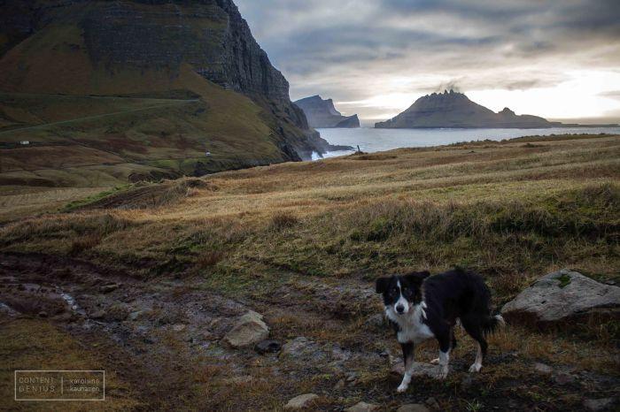 Faroe Islands Doggo (C) Karoliina Kauhanen
